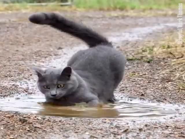 Кошка решила искупаться в луже