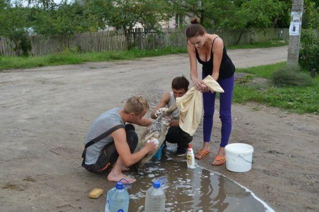 Жители в Бресте спасли семью лебедей от нефтепродуктов, слитых в озеро (6 фото)