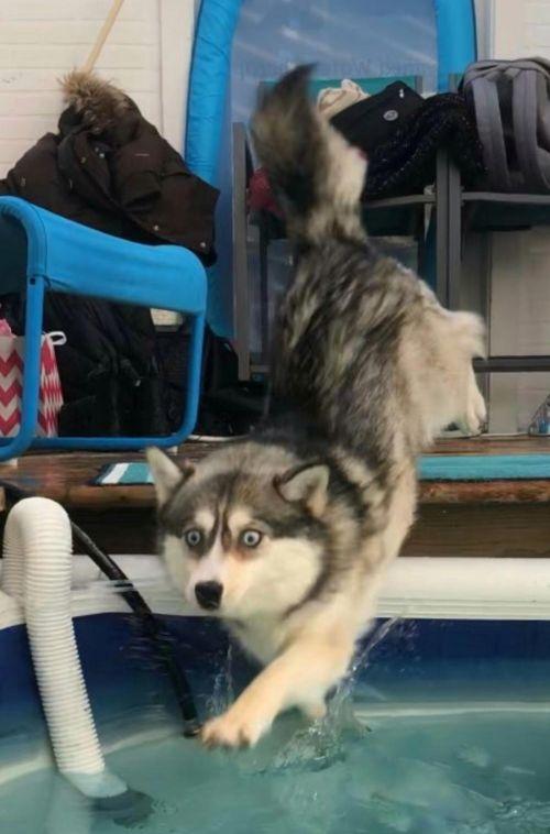 Момент, в который собака осознала свою ошибку (4 фото)