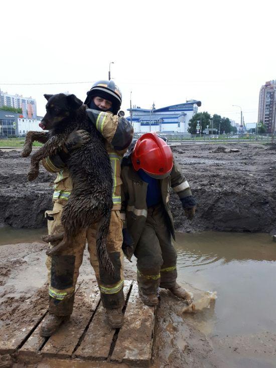 Спасатели высвободили собаку из грязевой ловушки в Санкт-Петербурге (2 фото + видео)