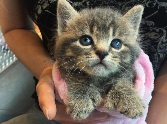 Девушка спасла двух крохотных необычных котят (6 фото)