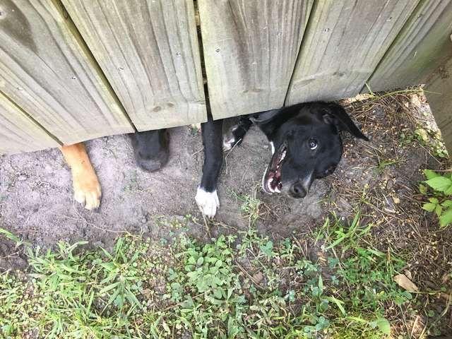 """""""Шпионы"""" за забором на соседском участке (5 фото)"""