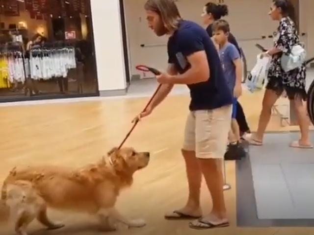Когда ваша собака боится ездить на эскалаторе