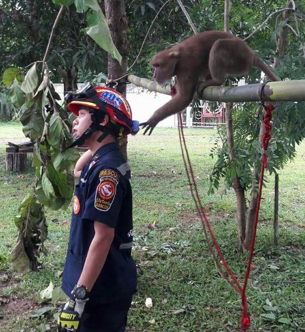 Трогательный момент после спасения обезьянки (4 фото)