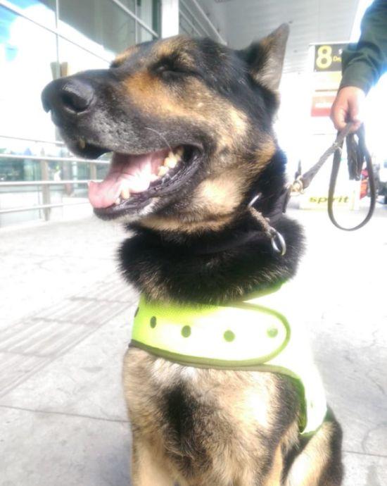 Колумбийский наркобарон назначил вознаграждение за голову собаки-ищейки (3 фото + видео)