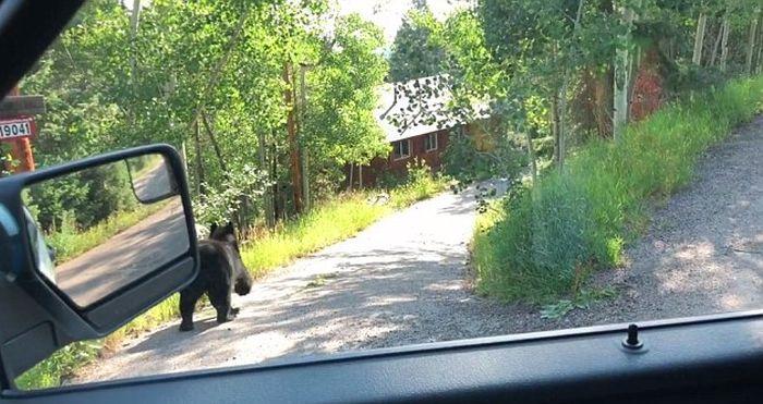 Медведь разгромил машину на парковке (5 фото + видео)