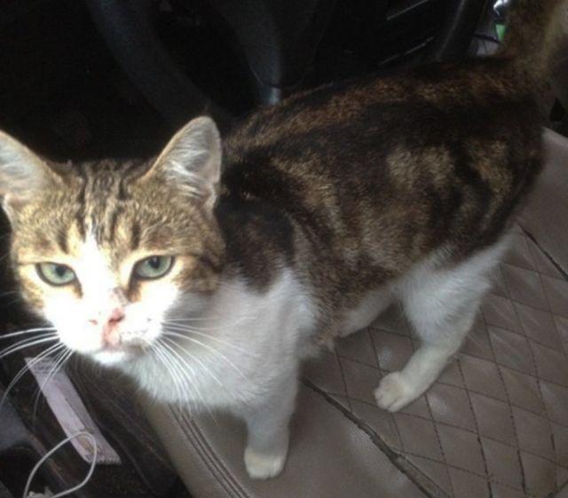 Полиция перехватила кота-наркокурьера (4 фото + видео)