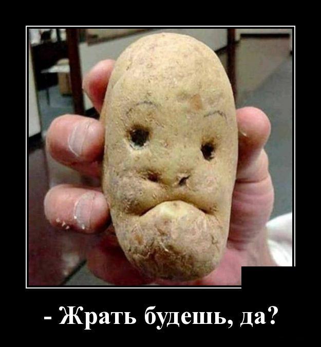 демотиваторы про картошку с мясом непродолжительные
