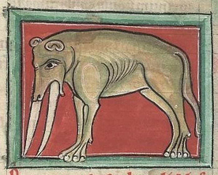 Как выглядел слон на средневековых рисунках (12 фото)