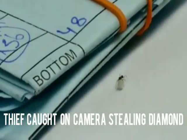 Когда вор попался на камеру
