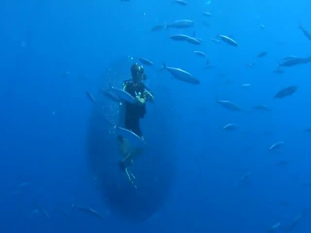 Тысячи мелких рыб окружили дайвера живым коконом