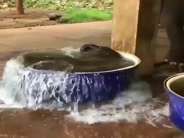 Слоненок спасает от летнего зноя