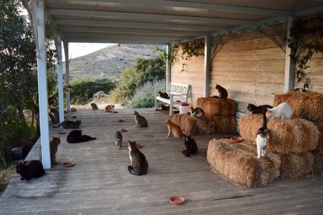 Необычное предложение о работе в Греции для настоящих любителей кошек (10 фото)