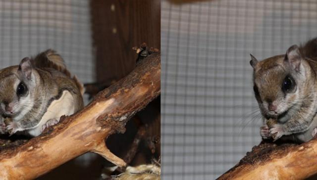 Гибриды животных, которые могут появиться вследствие изменения климата (12 фото)