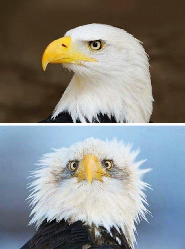 """Когда """"правильный"""" ракурс способен полностью изменить обычную фотографию (30 фото)"""