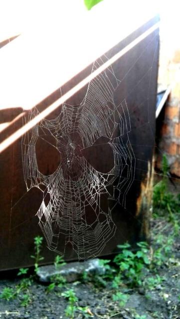 Жуткая природа, которая способна испугать кого угодно (34 фото)