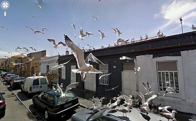"""Животные, которых можно увидеть в кадре на сервисе """"Карты Google"""" (20 фото)"""