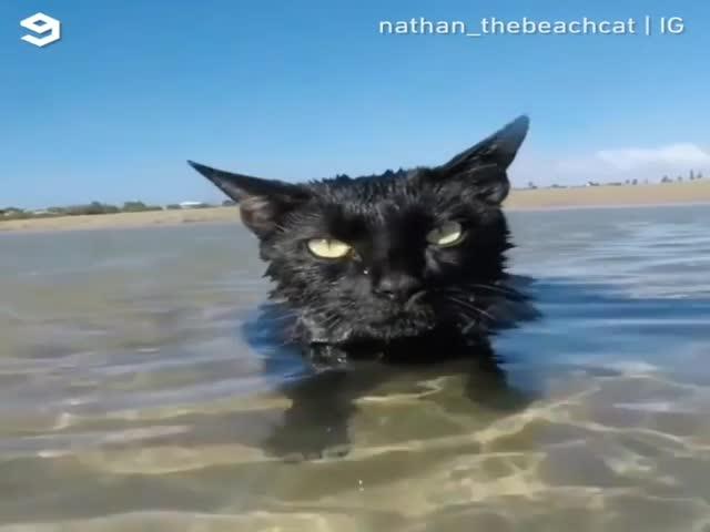 Не все коты боятся воды. Этот - обожает море!
