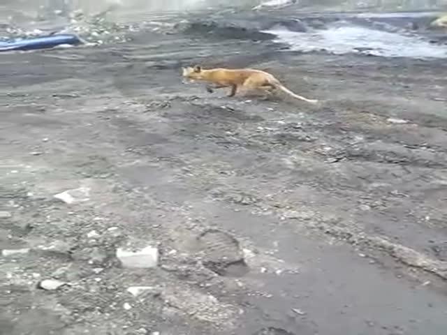 Решил покормить лису, но все пошло не по плану