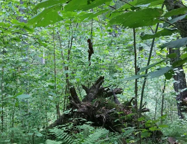 Неожиданно во время прогулки по лесу (4 фото)