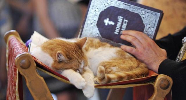 В подмосковном храме прошёл молебен о бездомных кошках и собаках (3 фото)