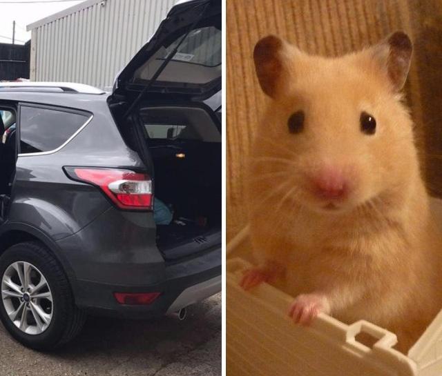 Хомяк выбрался из коробки и мстит хозяйке, уничтожая ее автомобиль (4 фото)