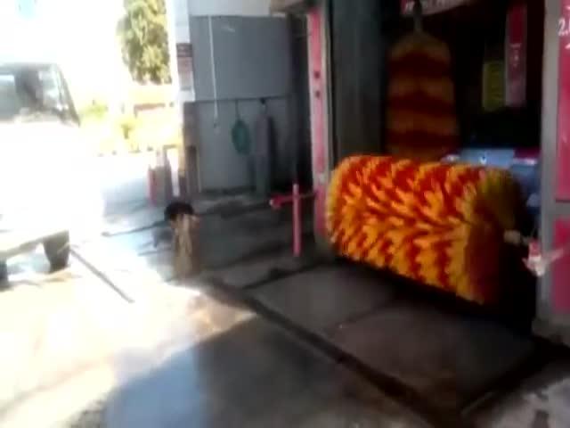 Пес нашел идеальный способ охладиться
