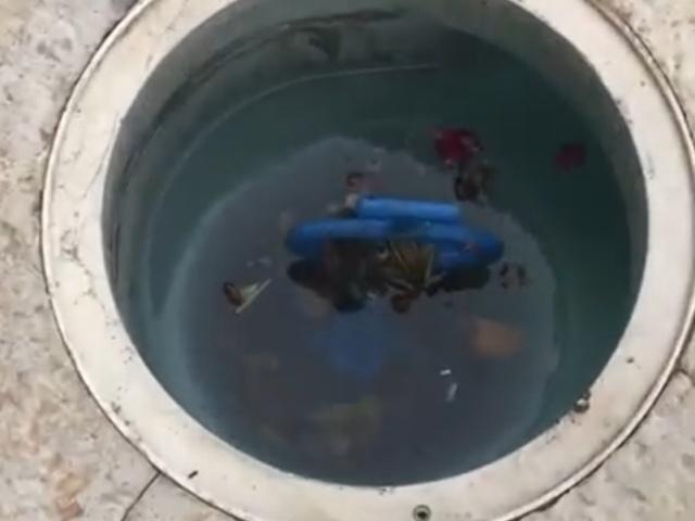 Спасение жабы и мышонка из ловушки для мусора в бассейне