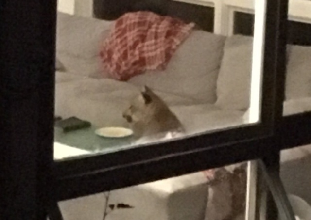 Незваный гость пробрался в дом (2 фото + видео)
