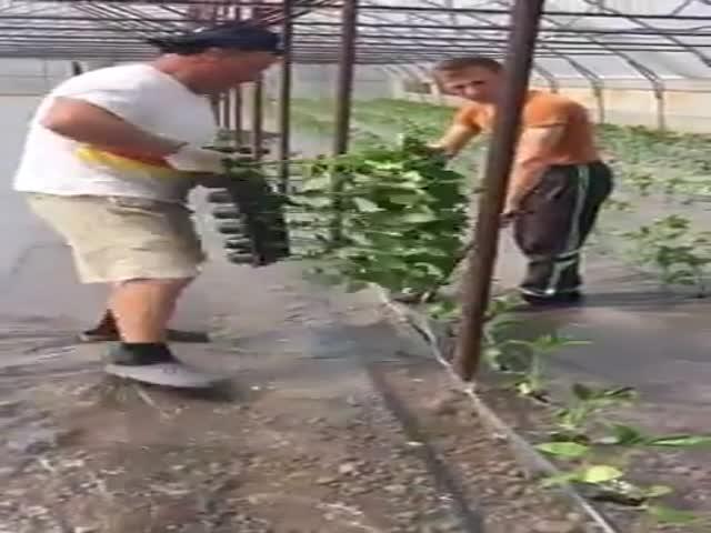 Быстрый метод посадки растений