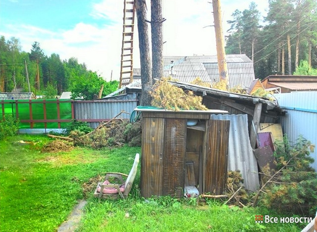 Пенсионер построил себе дом на вершинах сосен на чужом земельном участке (6 фото + видео)