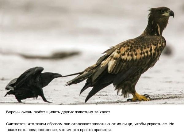 Познавательные факты обо всем на свете (13 фото)