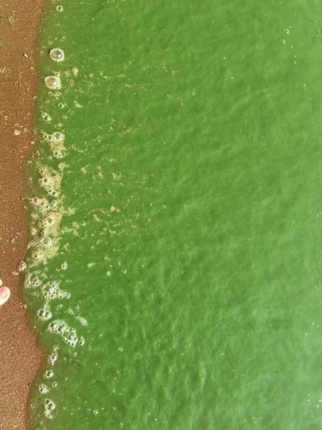Вода в Финском заливе окрасилась в ярко зеленый цвет (7 фото)