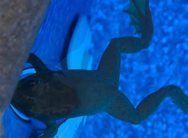 Умная лягушка, которой не приходится заботиться о пропитании (2 фото)