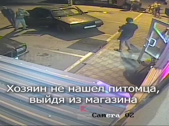 Пьяный мужчина ударил чужую собаку и поплатился за это