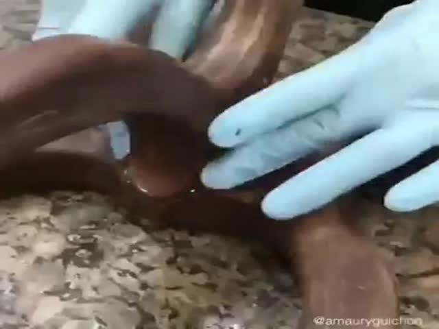 Шоколадных дел мастер сдает экзамен