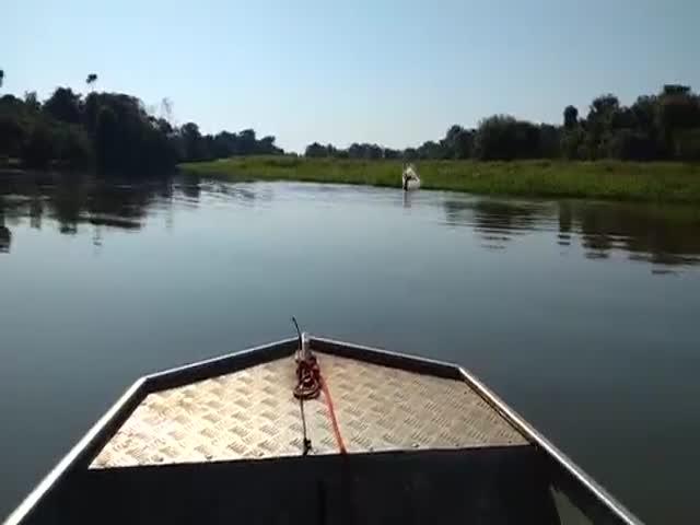 Рыбак снял на видео, как дельфины играют в футбол электрическим угрем