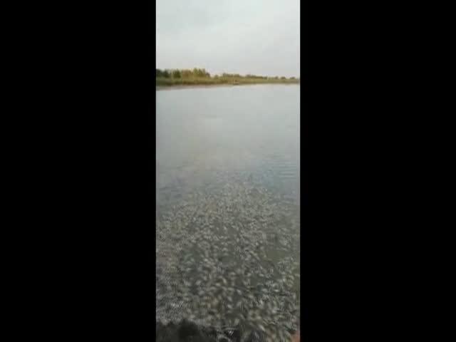 Река Бейсужёк Правый обмелела, что вызвало катастрофическую гибель рыбы