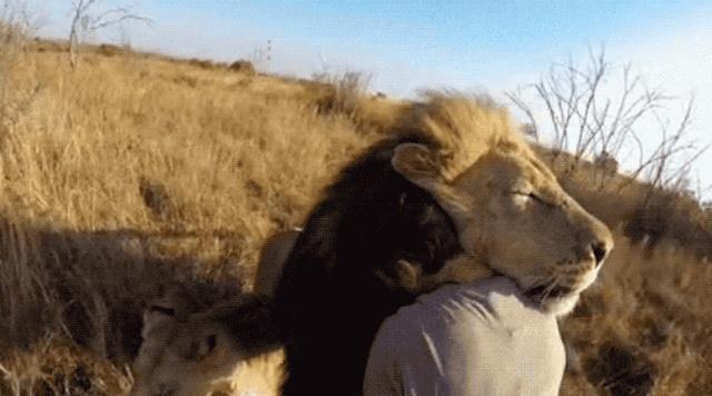 Позитивные и милые гифки с животными (13 гифок)