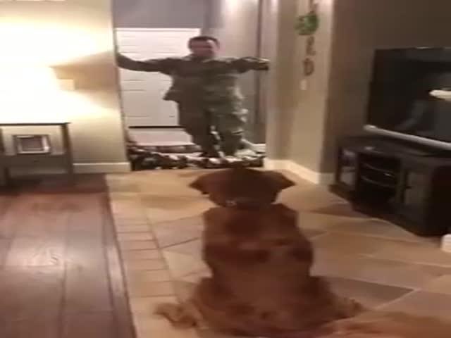 Собака, которая действительно удивилась розыгрышу