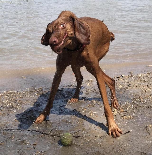 """Когда твой пес """"сломался"""" (21 фото)"""