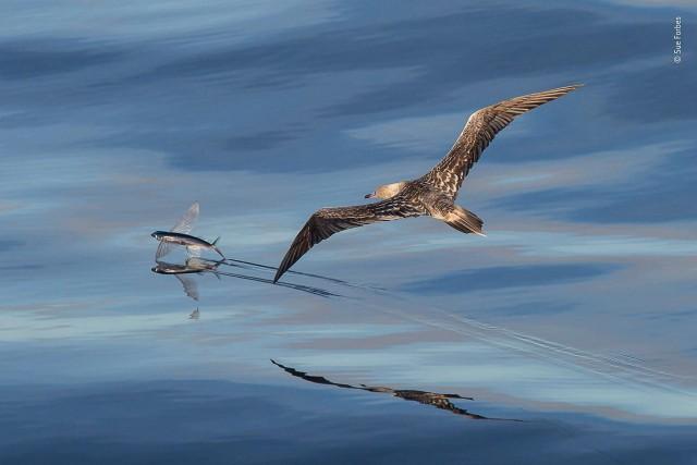 Лучшие фото конкурса дикой природы Wildlife Photographer of the Year (13 фото)