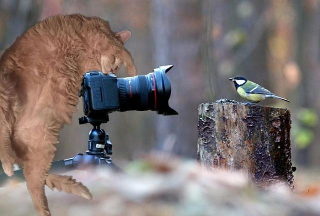 Просьба обработать фото кота переросла в битву фотошоперов (18 фото)
