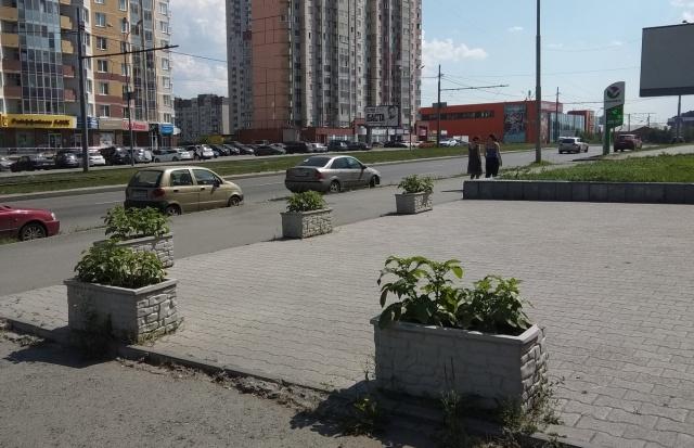 Странные декоративные клумбы в Екатеринбурге (2 фото)