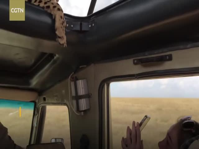 Гепард напугал туристов