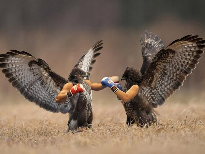 Смешные птички с человеческими руками (20 фото)