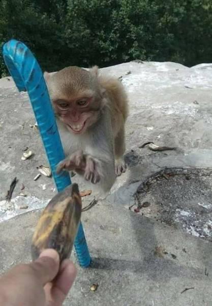 Забавные фото животных (23 фото)
