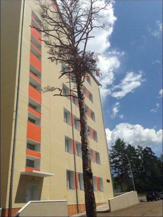 """""""Ожившие деревья"""": скульптура из сухого дерева (6 фото)"""