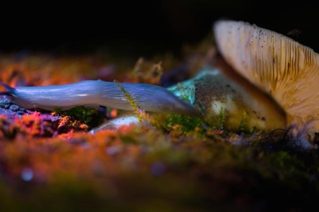 Прогулка по ночному лесу с УФ фонариком (11 фото)