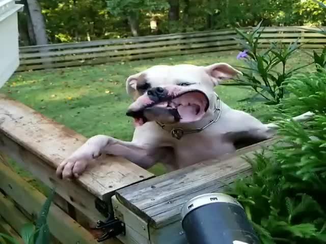 Пес и мощная воздуходувка